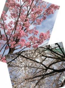 ももいろクローバーZ 有安杏果オフィシャルブログ「ももパワー充電所」 Powered by Ameba-image03.jpg